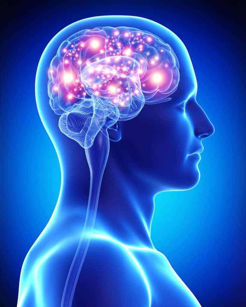 Brain showing active functions for sleep